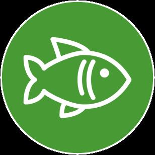 Aquaristik- & Teichfische
