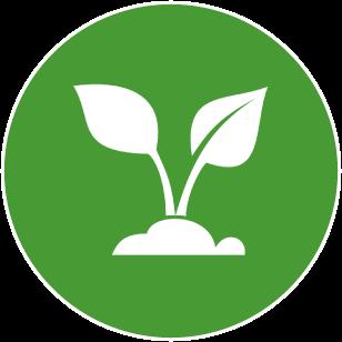 Pflanzen aus Stralsund